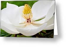 Magnolia Blossom 2 Greeting Card