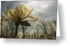 Magnolia Blossom Greeting Card