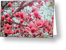 Magnolia Blossoms In Spring Greeting Card