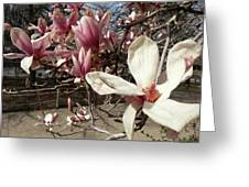 Magnolia Branches Greeting Card