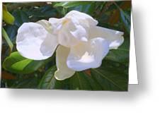 Magnolia Bud Greeting Card