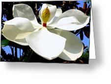 Magnolia Carousel Greeting Card