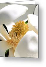 Magnolia Center Greeting Card