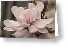 Magnolia Dream Greeting Card