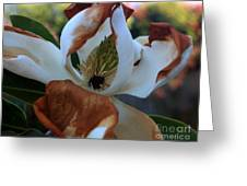 Magnolia For A Day Greeting Card