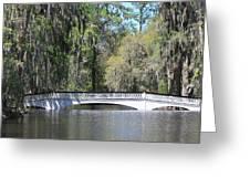 Charleston Sc Magnolia Gardens  Greeting Card by Ella Char