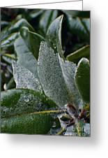 Magnolia  Leaves Greeting Card