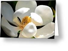 Magnolia Magic Greeting Card