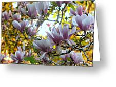 Magnolia Maidens In A Border Greeting Card