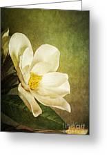 Magnolia Morning Greeting Card