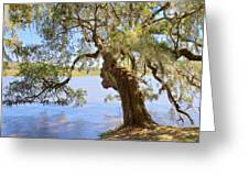Magnolia Plantation And Gardens In Charleston Sc Greeting Card