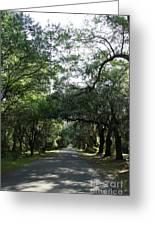 Magnolia Plantation Road Greeting Card