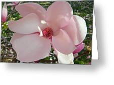 Magnolia Surprise Greeting Card