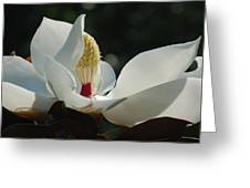Magnolia Tiny Gem Greeting Card