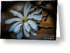 Magnolia Tree Blossum Greeting Card