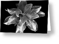 Magnolia Tree Leaves Greeting Card