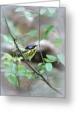 Magnolia Warbler - Bird Greeting Card