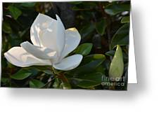 Magnolia With Best Bud Greeting Card