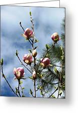 Magnolias In Bud Greeting Card