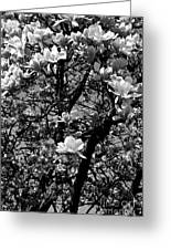 Magnolias In White Greeting Card