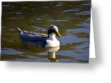 Magpie Duck Greeting Card