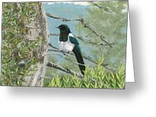 Magpie In Alaska Greeting Card
