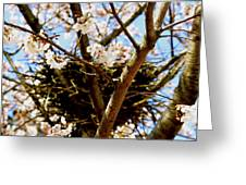 Magpie Nest In Cherry Tree Greeting Card