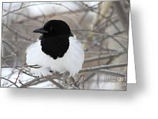 Magpie Profile Greeting Card