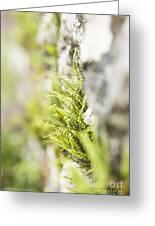 Maiden-hair Spleenwort Greeting Card