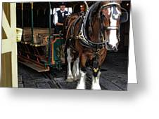 Main Street Horse And Trolley Greeting Card