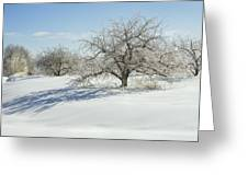 Maine Apple Trees Covered In Ice And Snow Greeting Card