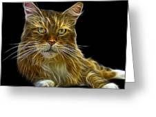Maine Coon Cat - 3926 - Bb Greeting Card