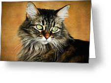 Maine Coon In Topaz Greeting Card