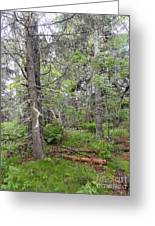 Maine Forest Greeting Card