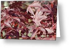 Maine Maple Leaves Greeting Card