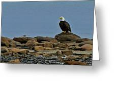 Majestic Bald Eagle Greeting Card by Rhonda Humphreys