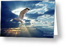 Majestic Bird Against Sunset Sky Greeting Card