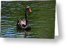 Majestic Black Swan Greeting Card