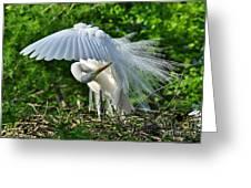 Majestic Egret Greeting Card