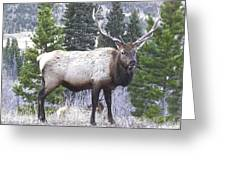 Majestic Elk Greeting Card
