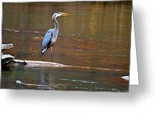 Majestic Heron Greeting Card