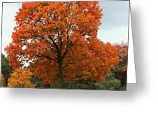 Majestic Maple Greeting Card
