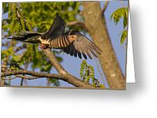 Majestic Mourning Dove  Greeting Card