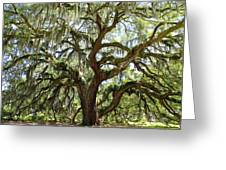 Majestic Oak 3 Greeting Card