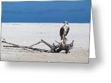 Majestic Osprey Greeting Card
