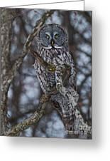 Majestic Owl Greeting Card