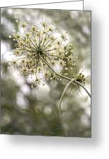 Majestic Queen -  Queen Anne's Lace Daucus Carota Greeting Card