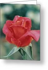 Majestic Red Rose Greeting Card
