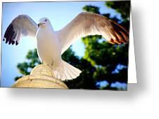 Majestic Seagull II Greeting Card