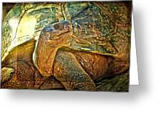 Majestic Tortoise Greeting Card